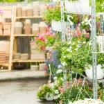 Hangup pots with flowers in garden center — Stock Photo #12060404