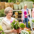 Stock Photo: Garden centre senior lady hold potted flower
