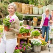 Garden center senior lady hold potted flower — Stock Photo