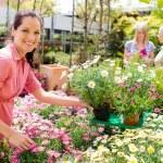 Florist arranging flower pots in garden store — Stock Photo