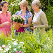 Three women shopping flowers at green house — Stock Photo