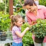 Mother daughter choosing flowers in garden shop — Stock Photo