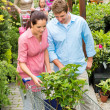 Garden centre young couple shopping plant flower — Foto Stock