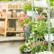 Hangup pots with flowers in garden center — Stockfoto