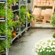 Garden centre green house with potted flowers — Stock Photo #12060406