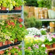 Garden centre green house with potted flowers - Stockfoto
