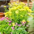 Stock Photo: Potted flowers at garden centre green house