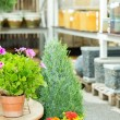 Potted flowers at garden centre green house — Stock Photo #12060436