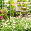 Green house flower shop at garden centre - 图库照片
