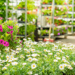 Green house flower shop at garden centre - Stock Photo