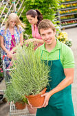 Garden centre worker hold potted plant — Stock Photo