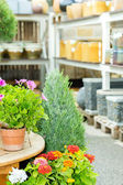 Potted flowers at garden centre green house — Stock Photo