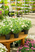 Potted flowers on table in garden shop — Stock Photo