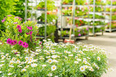 Green house flower shop at garden centre — Stock Photo
