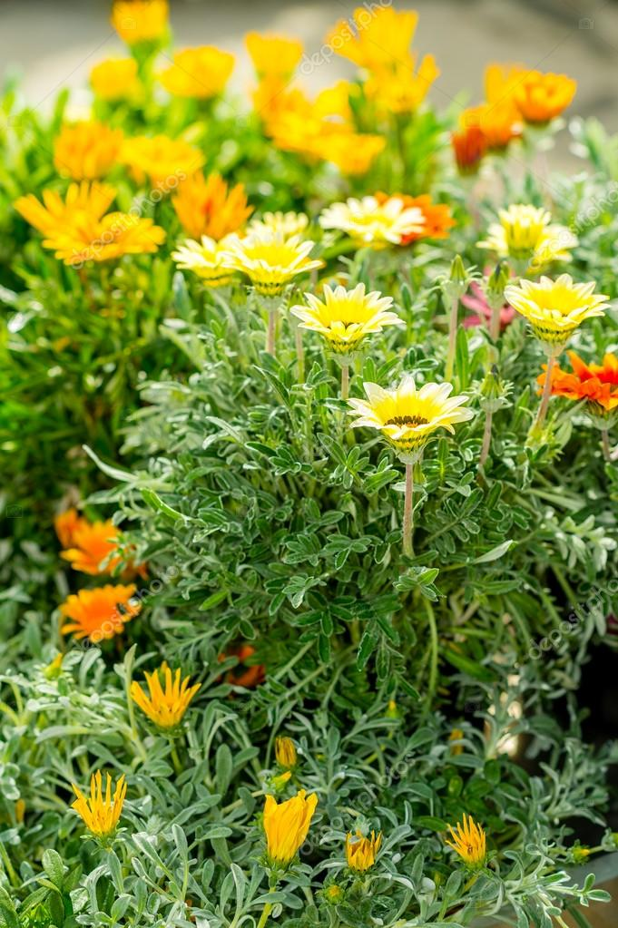 Yellow and orange marigold at garden centre flowers for sale — Stock Photo #12060458