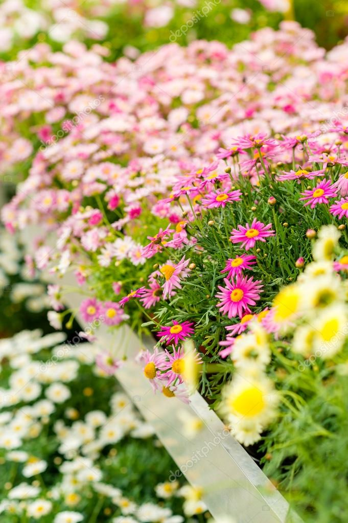 Colorful flowers at garden centre for sale at retail shop — Stock Photo #12060466