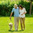 Happy couple walking dog on park lawn — Stock Photo #12447671
