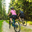 Mountain bikers in forest from behind — Stock Photo