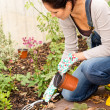Stock Photo: Woman kneeling planting flowerbed autumn garden