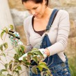 Young woman pruning tree bush autumn garden — Stock Photo
