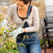 Stock Photo: Woman pruning autumn tree clippers garden hobby