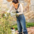 Stock Photo: Autumn gardening young womclipping bush hobby