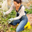 Happy woman gardening bush fall backyard kneeling — Stock Photo