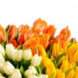 ������, ������: Spring flowers colorful bouquets of tulips
