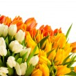 Bouquet of colorful tulip flowers spring freshness — Stock Photo #40764899