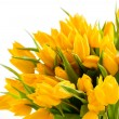 Bunch of yellow tulips spring flowers — Stock Photo #40764981