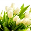 Bunch of white tulips spring flowers — Stock Photo