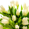 Stock Photo: White tulip flowers