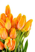 Spring flowers yellow and orange tulips — Stock Photo