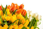 Colorful bunch of tulips spring flowers — Stock Photo