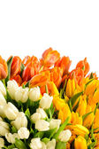 Spring flowers colorful bouquets of tulips — Stock Photo