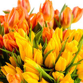 Colorful tulips bunch of spring flowers — Stock Photo