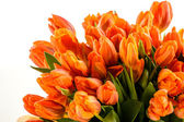 Bunch of spring tulips flowers — Stock Photo