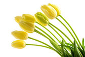 Yellow tulips flowers with long stalk — Stock Photo