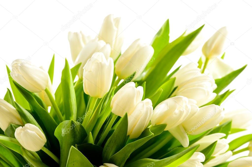 Mazzo di tulipani bianchi fiori primaverili — Foto Stock © CandyBoxImages #40...