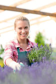 Woman with lavander flowers — Stock Photo