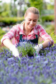 Worker looking at lavender flowerbed — Stock Photo
