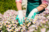 Hands touch daisy flowerbed — Stock Photo