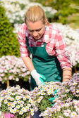 Woman check daisy flowerbed — Stock Photo
