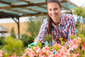 Florist working in garden center — Stock Photo