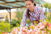 Woman working in pink flowerbed — Stock Photo