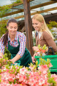 Woman advising customer buying plants — Stock Photo