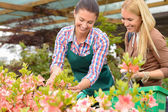 Woman show flowers to customer — Stock Photo