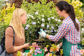 Florist give advice to customer — Stock Photo