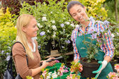 Woman worker selling potted plant — Stockfoto