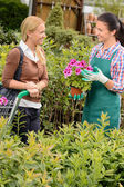Worker selling potted flower to customer — Stock Photo